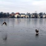 09.Januar: Wintervögel zählen