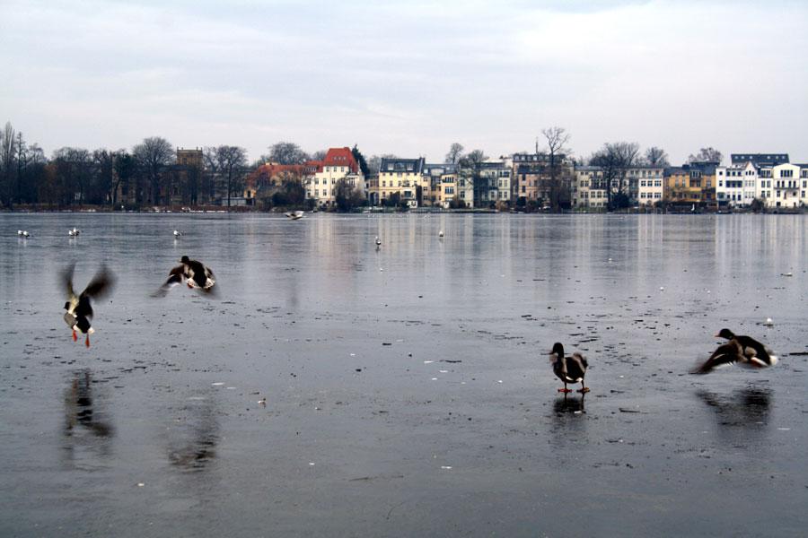 Vogelflug_web