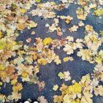 22. September // Vom Garten in den Topf – Blattgold