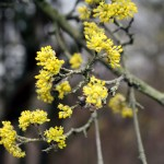24.03. 2017 – Den Frühling herzlich begrüßen