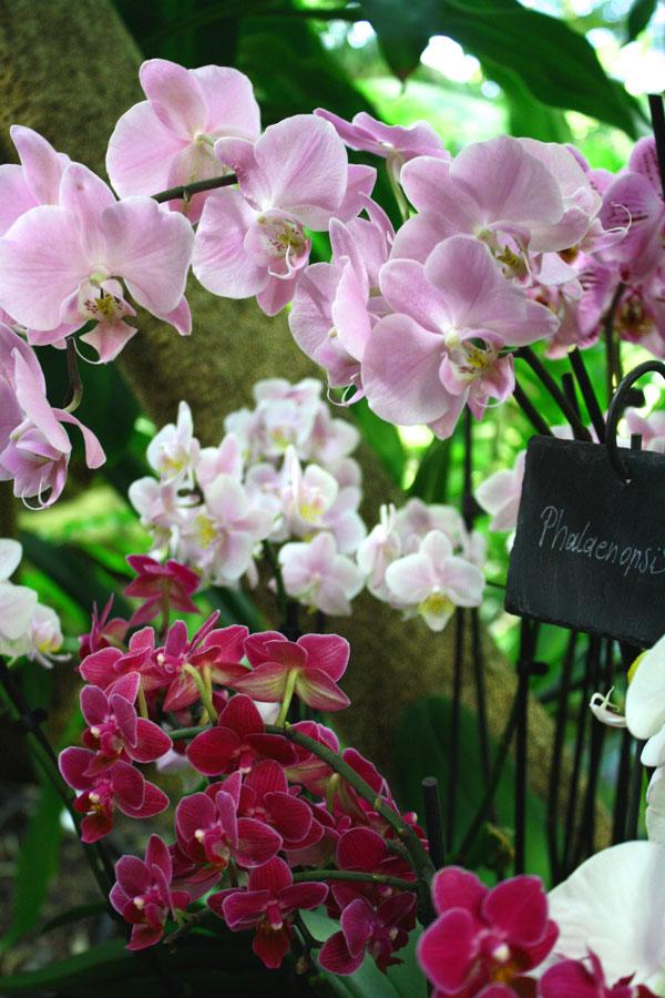 orchidee1_web
