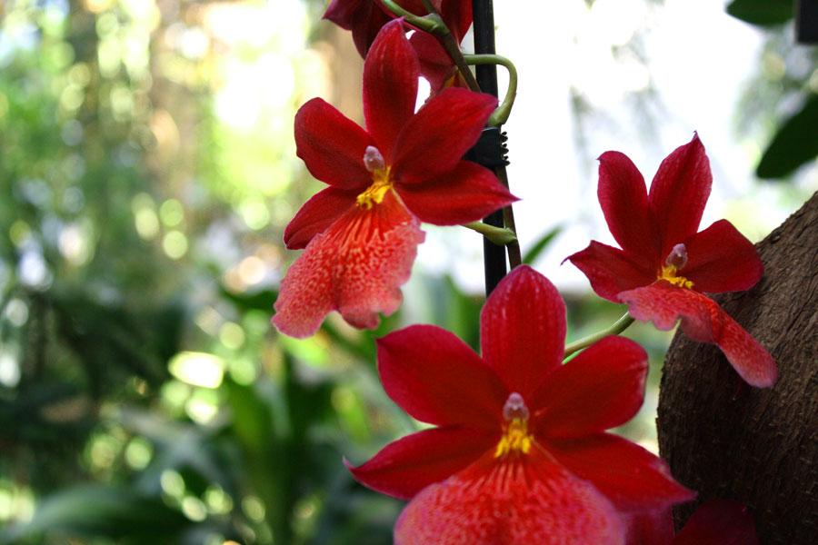 orchidee2_web