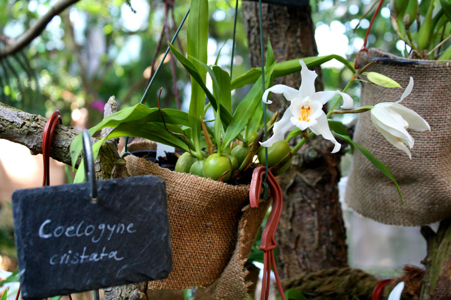 orchidee3_web