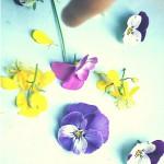 11.05.2016: Blüten pressen für ein Herbarium