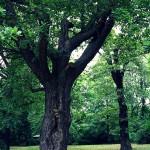 26.06. Wie alt ist dieser Baum ?