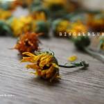 14. Juli – Ringelblumen trocknen