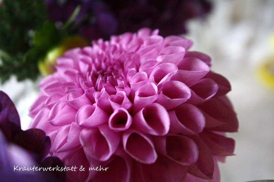 violetteblume_web