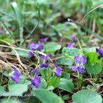 29. März // Kräuterführung in den Frühling – Zusatztermin