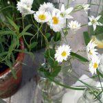 21. April // Vom Garten in den Topf – Seerosenweiß
