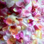 26. Mai // Vom Garten in den Topf – Rosenrot