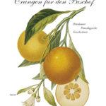 Buchtipp // Orangen für den Bischof