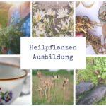Heilpflanzen-Ausbildung // Bildungsurlaub
