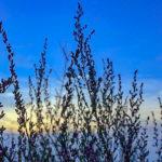 Kräuter entdecken beim Fastenwandern