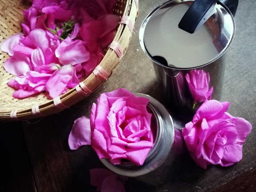 duftendes rosenwasser einfach selber machen kr uter. Black Bedroom Furniture Sets. Home Design Ideas