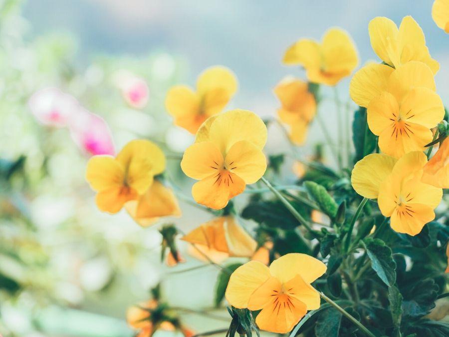 Blumen ergänzen meine Frühlingskur