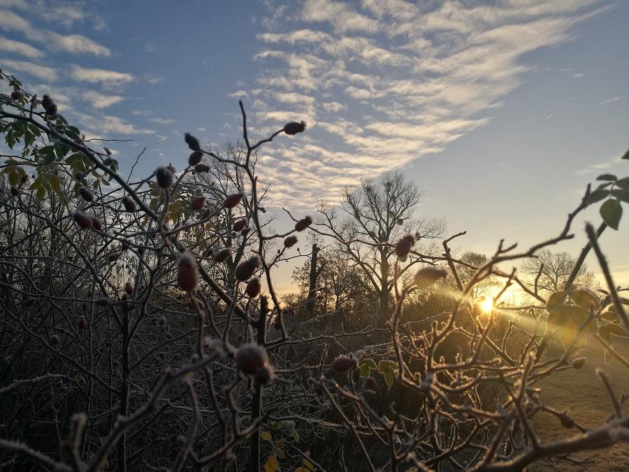 Winter mit dem Online-Jahreskurs