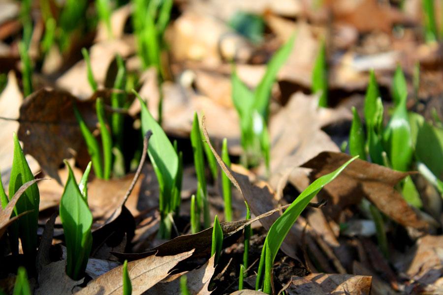 Webinar Frühjahrsputz